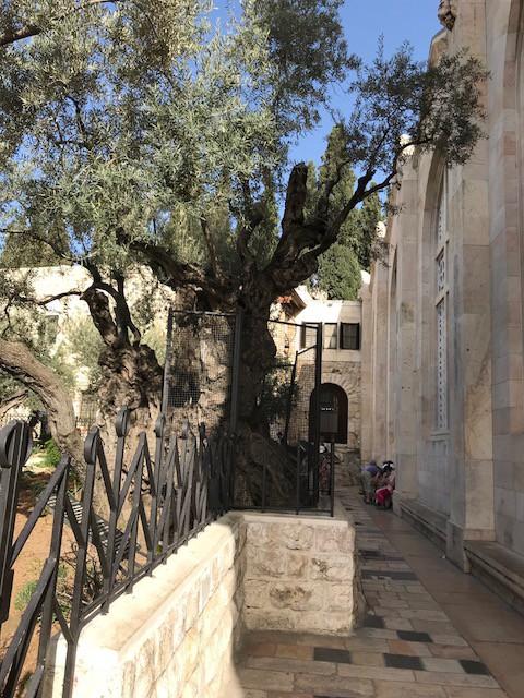 600 Jahre alt